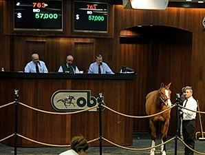 OBS Winter Mixed Sale Ends on Solid Note