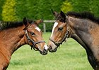 108 Foals to Date from Frankel's First Crop