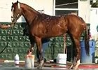 Belmont Stakes: California Chrome Bath 05/30/2014