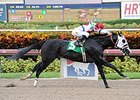 Bahamian Squall Ends Skid at Gulfstream Park
