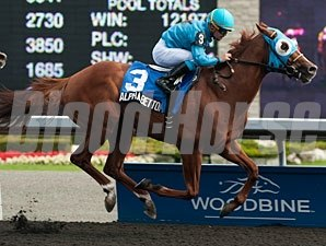 Alpha Bettor won the 2013 Seagram Cup Stakes.