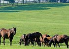 Reports of Mares Bred Due by Aug. 1.