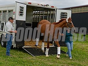Wise Dan arrives at Charlie and Amy LoPresti's Forest Lane Farm.