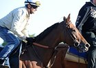 Beholder Makes Eastward Trek for Ogden Phipps