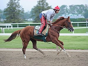 California Chrome Unfazed by Opossum on Track