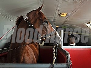 California Chrome aboard a flight bound for Baltimore on May 12.