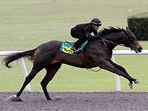 Midshipman Colt Posts Fastest Ocala Drill