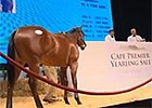 Cape Thoroughbred Sale - Mike Bass