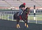 Dubai World Cup: Training March 28, 2013