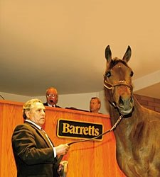 Sire Power on Display at Barretts Mixed Sale