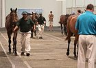Cape Premier Yearling Sale