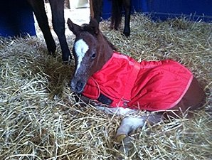 Havre de Grace, Plum Pretty Produce Foals