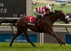 Dimension Looking to Improve in Turf Sprint