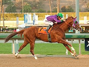 California Chrome Gallops in Cal Cup Derby