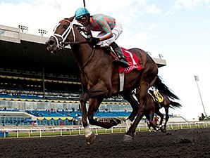 Conquest Harlanate Overpowers Mazarine Foes Bloodhorse Com