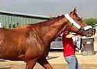 Breeders' Cup - Wise Dan Arrives at Santa Anita