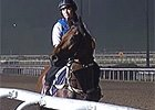 Singapore - Jason Warren and Bel Sprinter