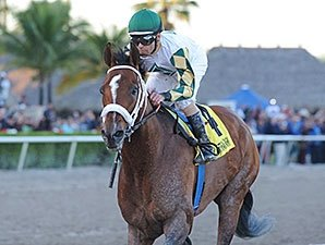 Mucho Macho Man Returns to Tab in Florida