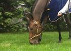 Preakness Stakes: Ria Antonia Gets a Snack