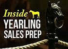 Inside Yearling Sales Prep: At The Sales