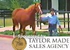 Fasig-Tipton July Feature - Mark Taylor