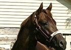 Smarty Jones Now a Broodmare Sire