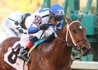 Tanzanite Cat Puts Speed to Test at Sunland