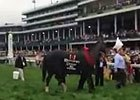KY Derby: Orb Leaves the Winner's Circle