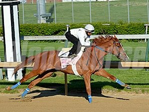 "Rosalind <br><a target=""blank""http://photos.bloodhorse.com/TripleCrown/2014-Triple-Crown/Kentucky-Derby-Workouts/i-C4WWrjB"">Order This Photo</a>"