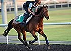 Dubai World Cup: David Redvers - Dunaden