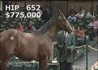 Keeneland Sept Yearling Sale: Hip 652 in the Ring