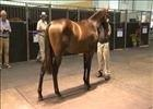 Cape Thoroughbred Sale - Pippa Mickleburgh