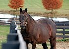Old Friends Retiree Patton Euthanized