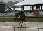 Preakness Stakes News Update for May 16, 2014