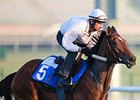 Dubai World Cup Thoughts 2014