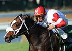 Stephanie's Kitten Scratches Out JF Turf  Win