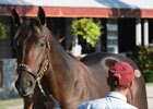 Keeneland September Yearling Sale: Taylor Made