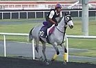 Dubai Carnival: March 6 Morning Training