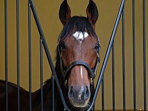 First Frankel Foal Arrives at Coolmore