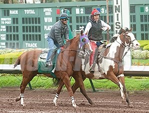 California Chrome and Victor Espinoza work at Los Alamitos Race Course Feb. 2, 2014.