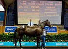 Dam of Champ Star Witness Tops MM Session