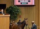 Flotilla's Half Sister Sells for $425,000