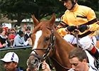Wise Dan - Shadwell Turf Mile Highlight Video 2014