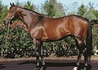 Gio Ponti's Yearlings 'Very Like Daddy'