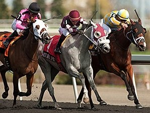 Wild Catomine Prevails in Fury Stakes Duel