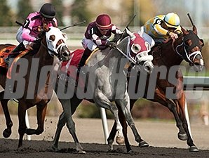 Wild Catomine (right) fights for the win in the Fury Stakes.