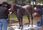 Travers Stakes: Bayern Gets a Bath