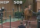 Keeneland Sept Yearling Sale: Hip 508 in the Ring