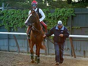 California Chrome Schools in Belmont Paddock