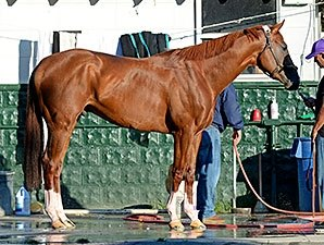 California Chrome's Stud Future Looks Tricky